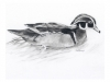 duck_low
