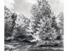 pond trees_low