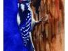 woodpecker_low